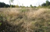 Euthystira brachyptera: Habitat on a humid clearcutting on the eastern Swabian Alb [N]