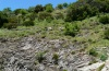 Papilio hospiton: Typical larval habitat: rocky slope with some scrub and Ferula communis (Sardinia, May 2012) [N]